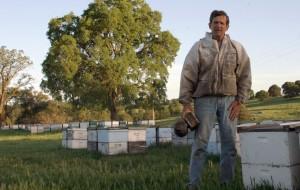 Steve Ellis and his bees.