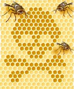 honeybee-1